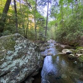 Serene wooded creek