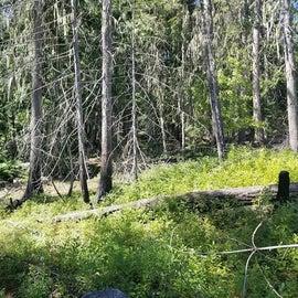 Woodland around the lake