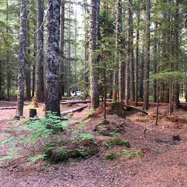 lots of forrest for kids to play in.