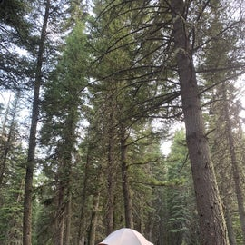 Perfect place for our REI Camp Dome 6 (10'x10').