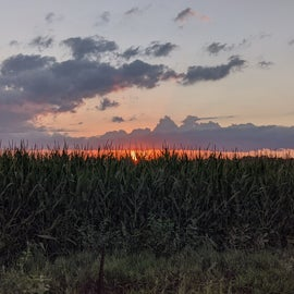 Sunset over the Cornfield