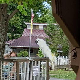 Vitale Park had animal educators
