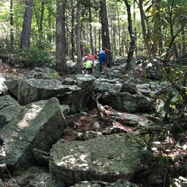 Hiking up from the steam on Evitt's Mountain trail