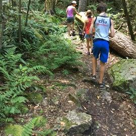In the stream gorge on Evitt's mountain trail