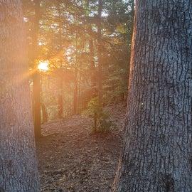 Beautiful sunset through the trees.