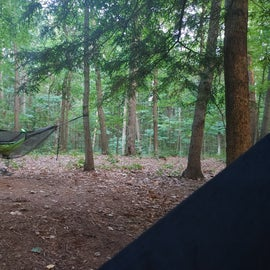 Awesome trees to hammock in and no need to set up a tent at this site.