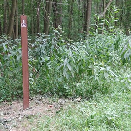 You will pass site 9 on your way to 10. Where as 8 is on the right of the parking lot on a different trail.