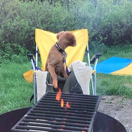 puppy by the fire pit.