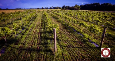 Vinedo del Alamo WInery