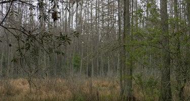 Florida / Groveland Richloam WMA - Bay Lake Camp