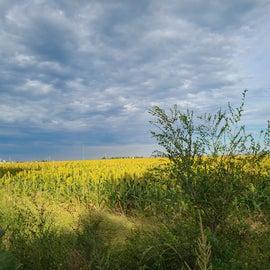 Grain fields behind the lake