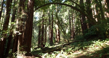 Madrone Group Area Campground