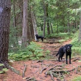 Glen Lake Trail