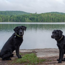 Our dogs near the shore of Glen Lake