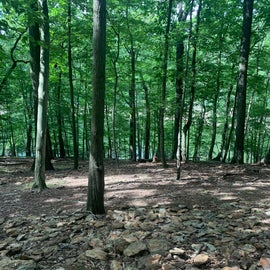 Part of the disc golf course is within the woods very nice hike , even saw deer nearby as we played