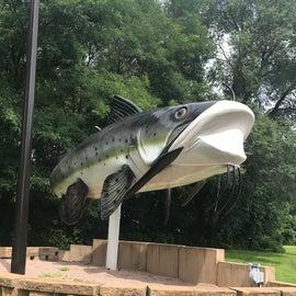 Trempealeau masked catfish!