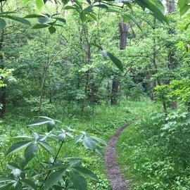 """""""Big Woods"""" Trail"""