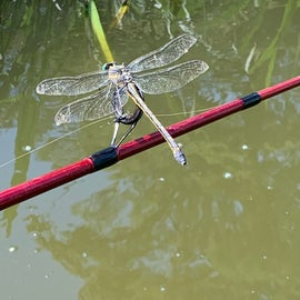 For dragonfly lovers, they were everywhere