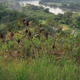 Top of trail 10 over looking Missouri River basen
