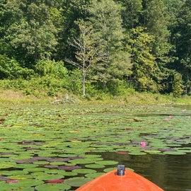 "LilyPad ""Field"" while kayaking"