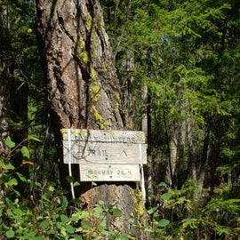 """Early Winters Trail aka """"Scenic Trail"""" from the map."""