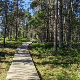Boardwalk from county park along the coastline