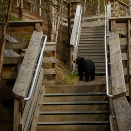 A local using the convenient stairs down to the Russian River board walk. Do the board walk and the RR Falls trail! The Gwins Lodge store (check-in point) can give hiking and fishing advice.