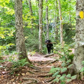 Kent Brook Trail