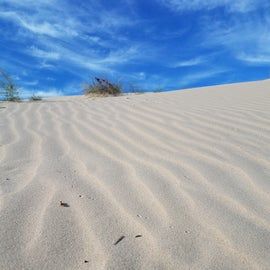 no critter tracks and windblown sand