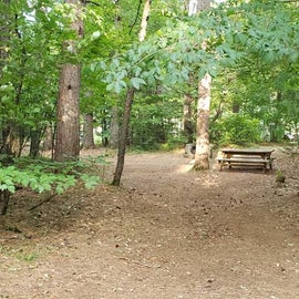 Meadowbrook Site 51