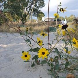 Wildflowers & white sandy beaches 😍 🤗