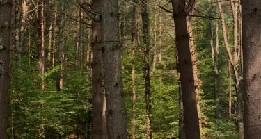 Savage River State Forest