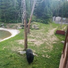 Bear Center