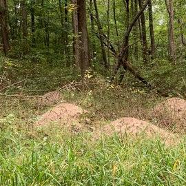 Mound builder ant hills