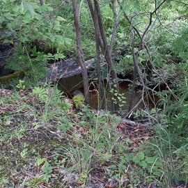 Creek on one edge of our site