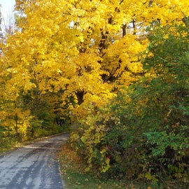 Campground Road - near site #3 & #4