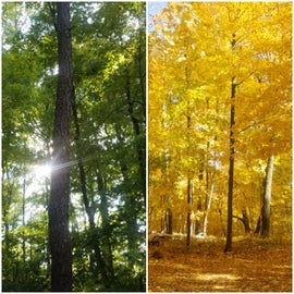 The difference in colors from Oct 1 to Oct 13th.