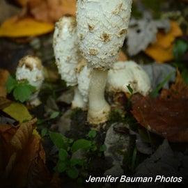 Cool fungi
