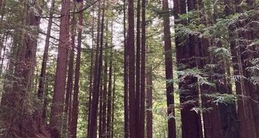 Crescent City / Redwoods KOA