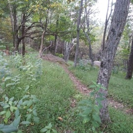 Slight path (corner right in the pic) from the edge of site E178 to the Appalachian Trail with a  flat-rock outcrop in the background