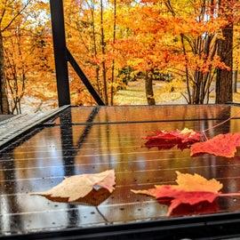 The autumn light is devine.