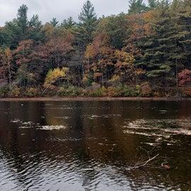 Chickering Pond
