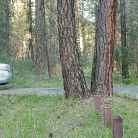 Wildlife in the campground