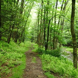 Bear Creek Trail- hiking along the river (Bear Creek)