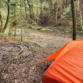 Cheeseman Run Creekside Campsite