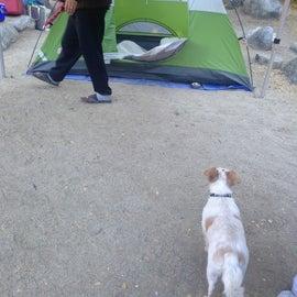 Campsite monitor 🐶