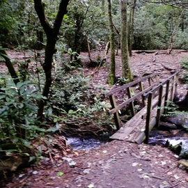 Log footbridge on the way to the waterfall