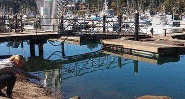 Dolphin Isle Marina & RV Park