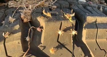 Bug Beach BRA #5