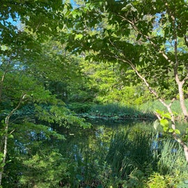 Pond on site contributes to mosquitoes in the area bring bug spray